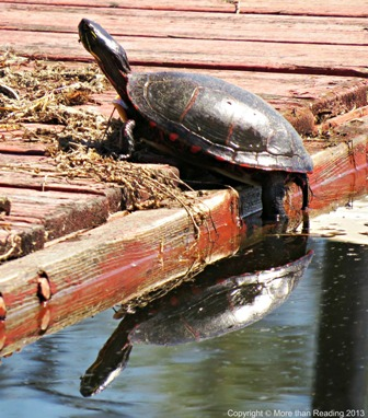 Turtle on dock